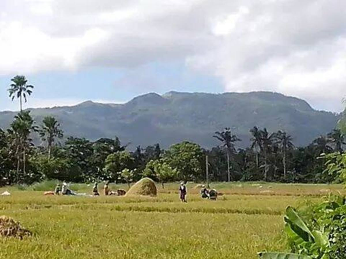Panoramic View @ Baliuag Nuevo, farmers threshing newly-harvested rice or palay (Photo Source: Ireno A. Alcala)