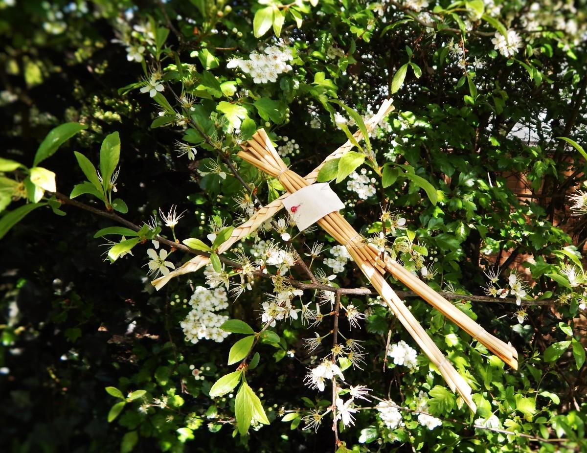 A Straw Man (gwr gwyllt) hanging in a May tree.