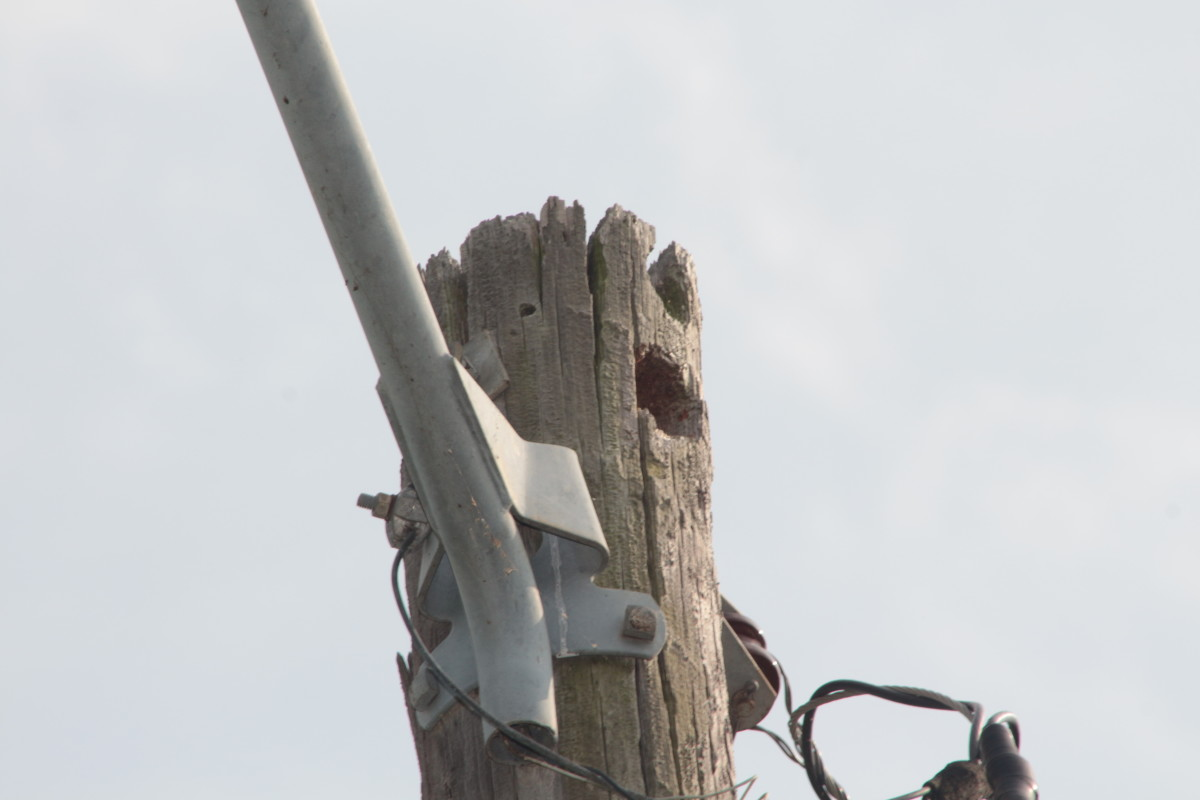 birds-and-utility-poles