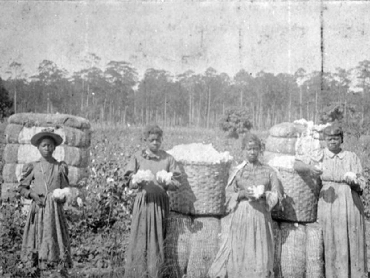 In some parts of the country, some cotton farmers used slaves to harvest cotton.