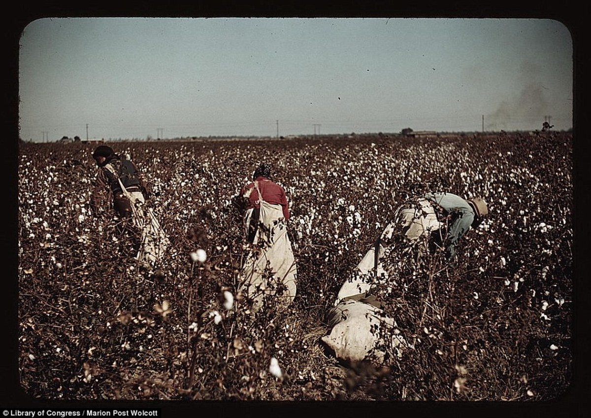 There were no small cotton fields.