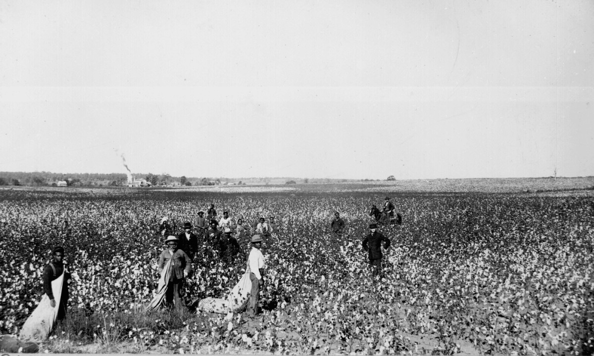 How would you like to work all day for a nickel a pound for your cotton?