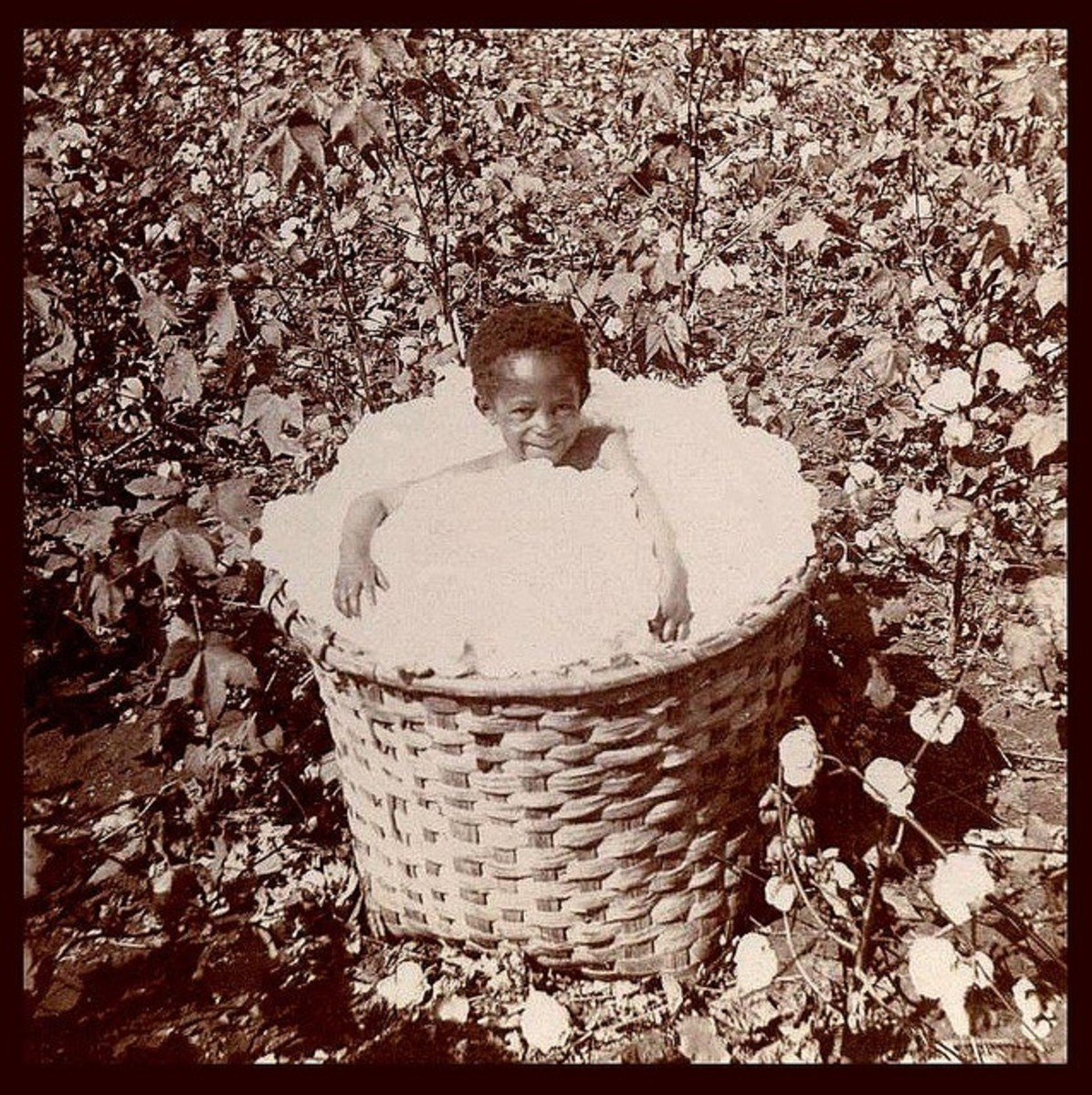 Little girl plays in basket of cotton.