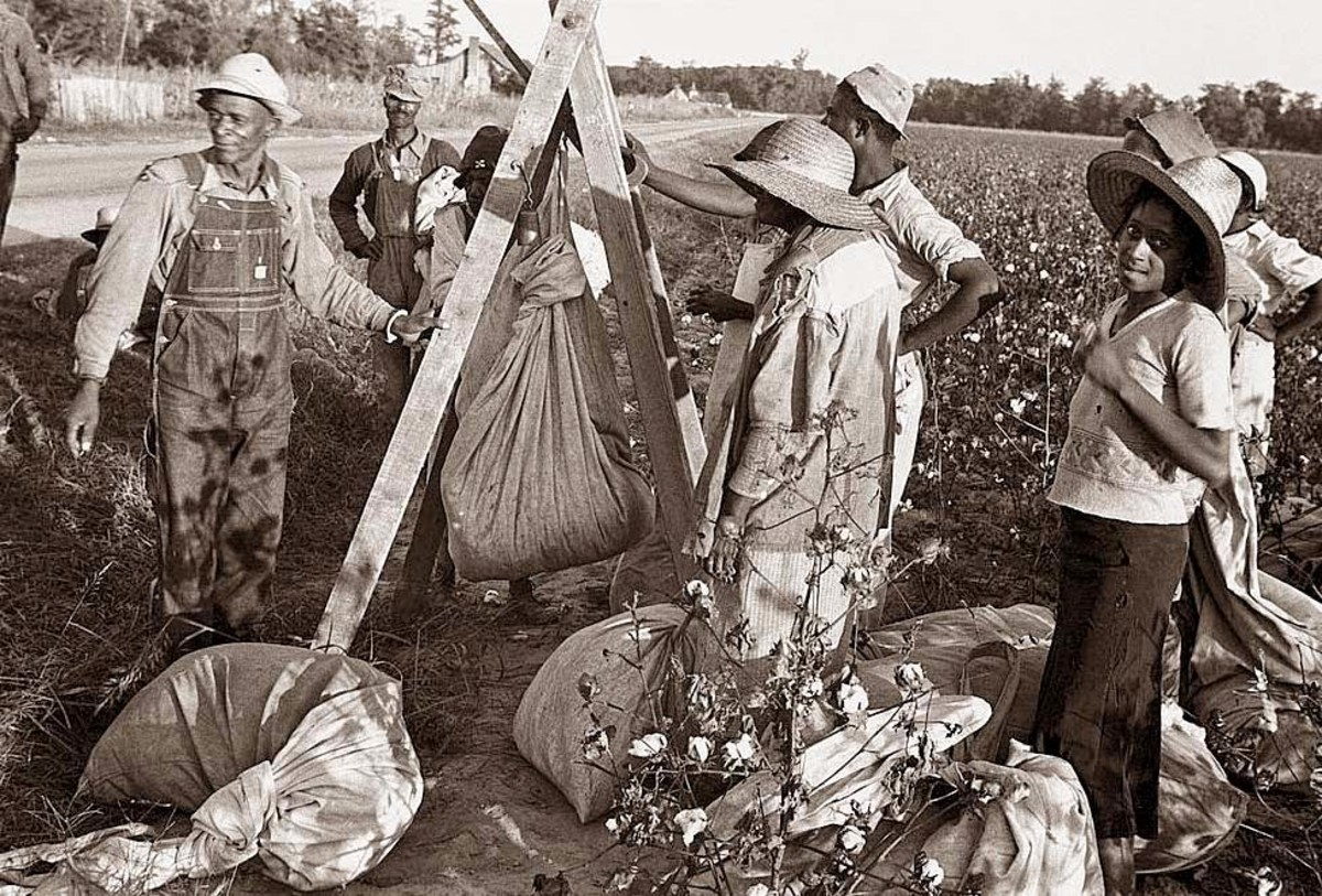 At day's end, all cotton picked by the crew is weighed so each worker can get a fair wage.