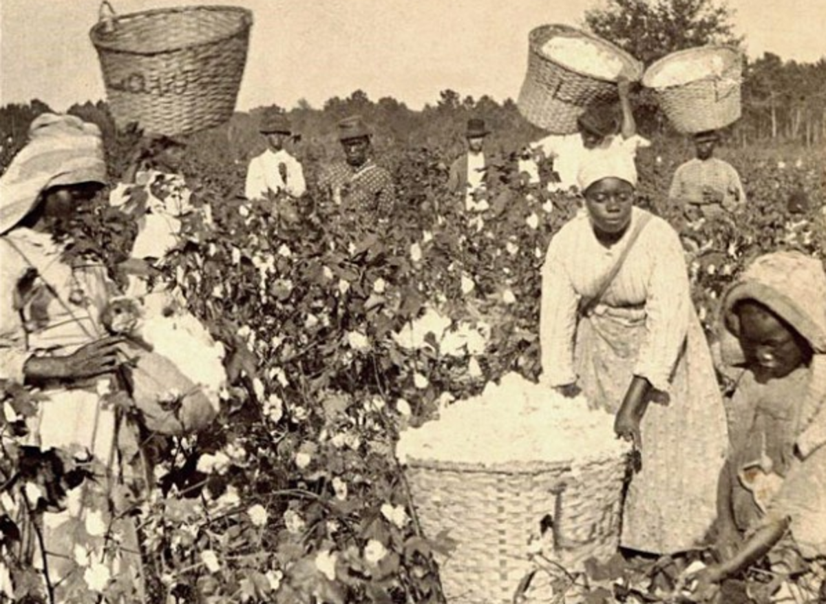 Long days in the hot sun for meager wages: that was what cotton picking was all about.