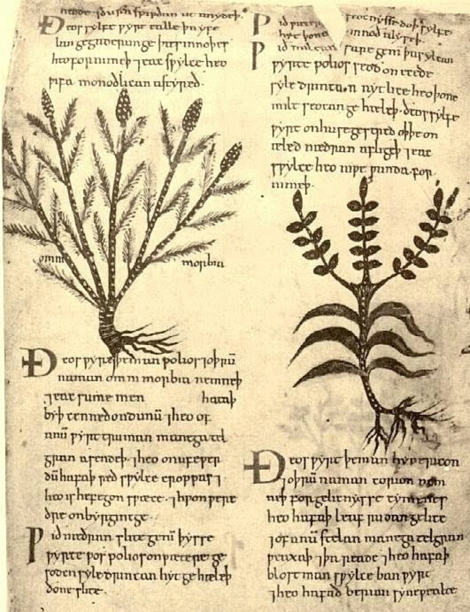 The Anglo-Saxon Nine Herbs Charm