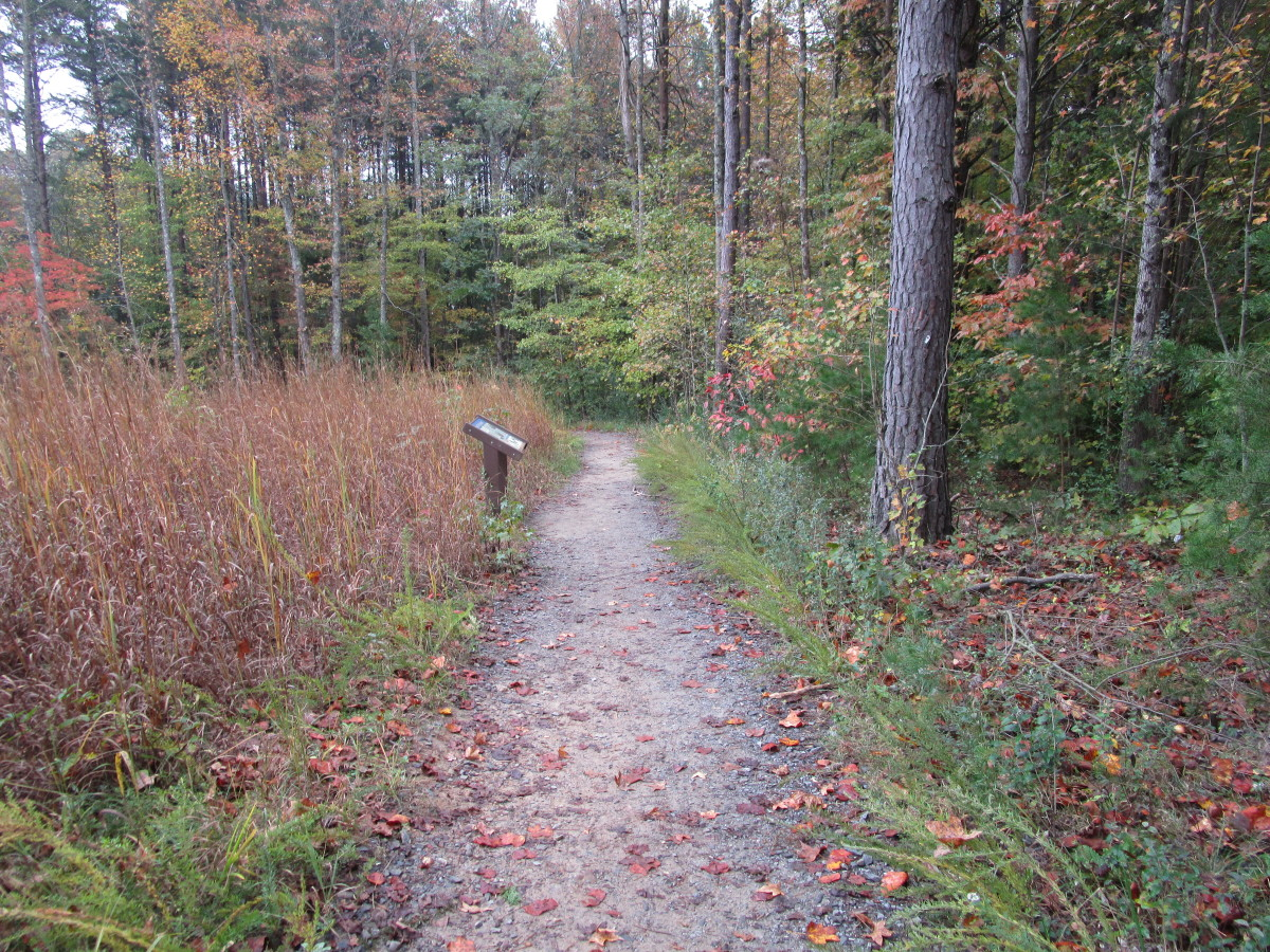 Turnback Trail, which connects to the Pinnacle Trail.