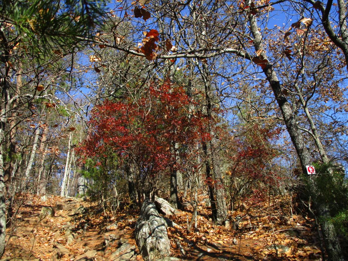 Beautiful deep orange-reddish leaves.