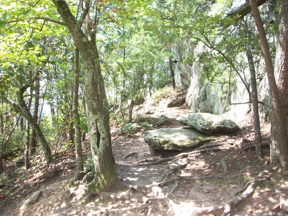 As you hike up The Pinnacle Trail, straight ahead as seen in this photo are the large boulders to climb to get to the views. It's not as bad as it looks!