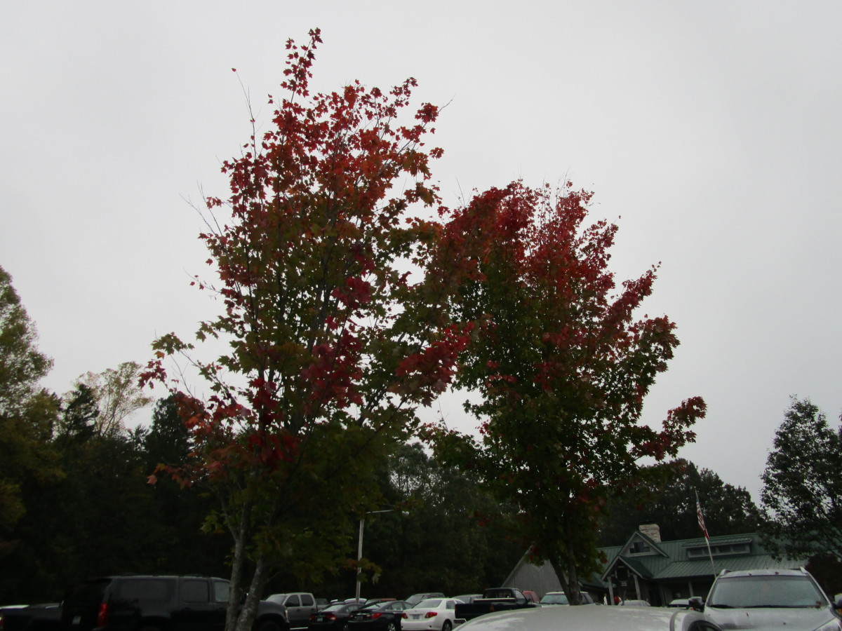 Trees in the parking lot are changing colors.