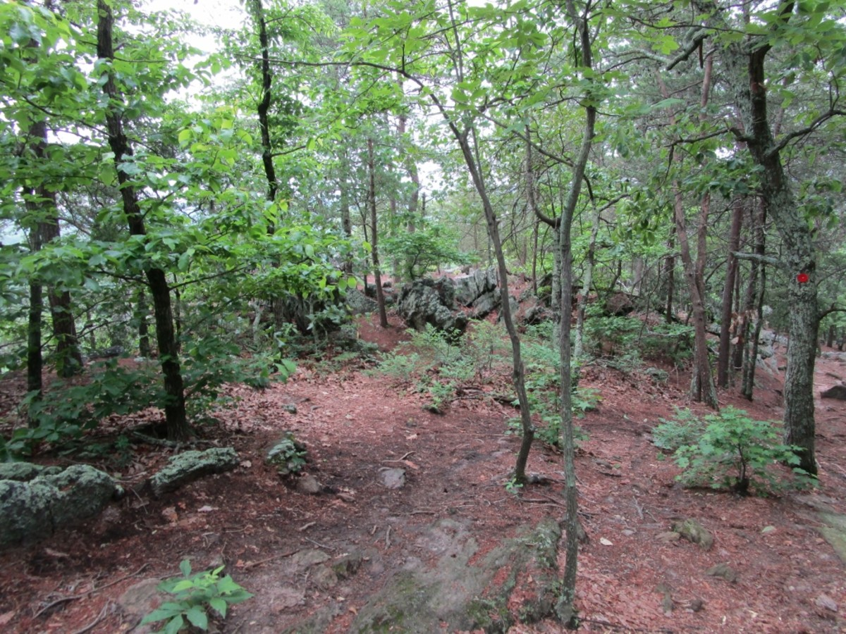 A view along the Rocktop Trail at Crowders Mountain State Park.
