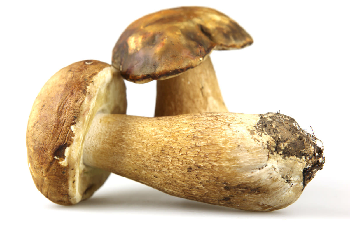 growing-mushrooms-for-profit-and-pleasure