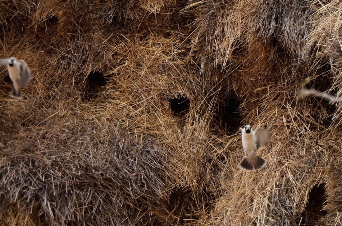 All the holes you see in the nest are entrances to different nests and different parts of the nest.  For example, they have different rooms for breeding, nurseries, and communing.