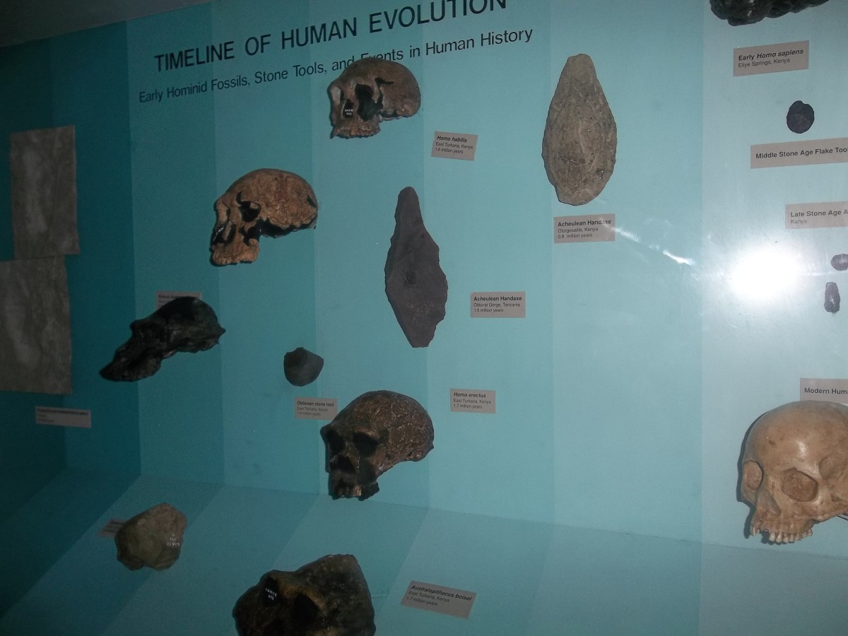 Some archeological objects displayed at the Olorgesailie site