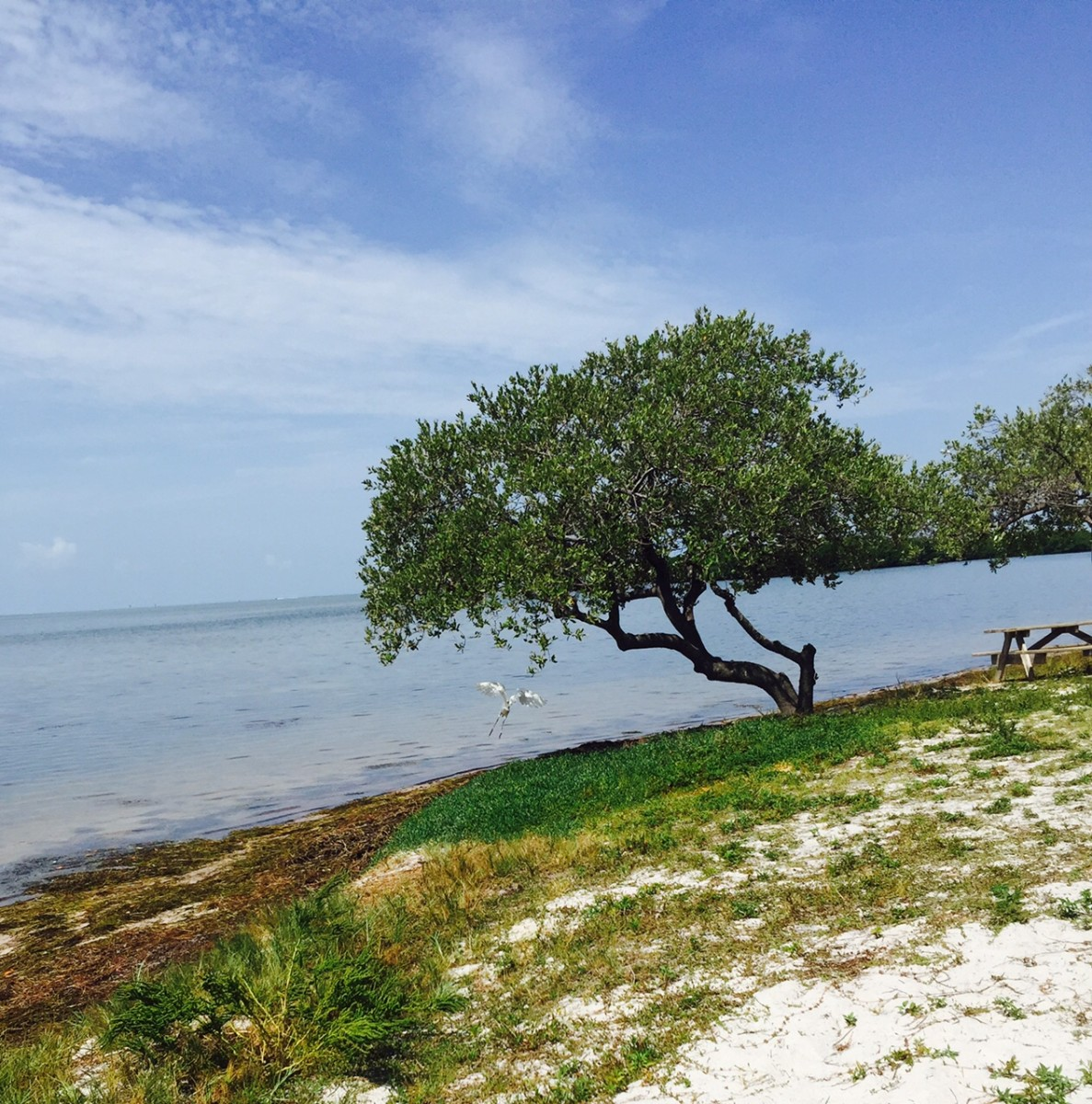 This shot is down the beach area in the Curry Hammock State Park. You get a nice panorama of the Atlantic Ocean and a few small islands. And you get a great breeze which is a necessary thing here in the Keys.