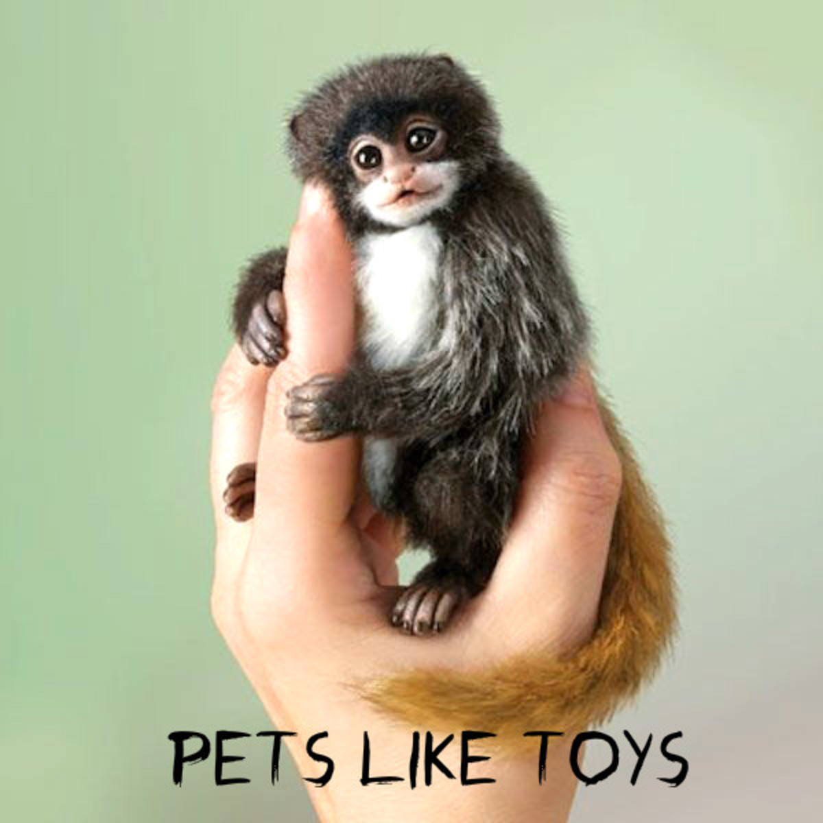11 Cutest Pets Like Toys