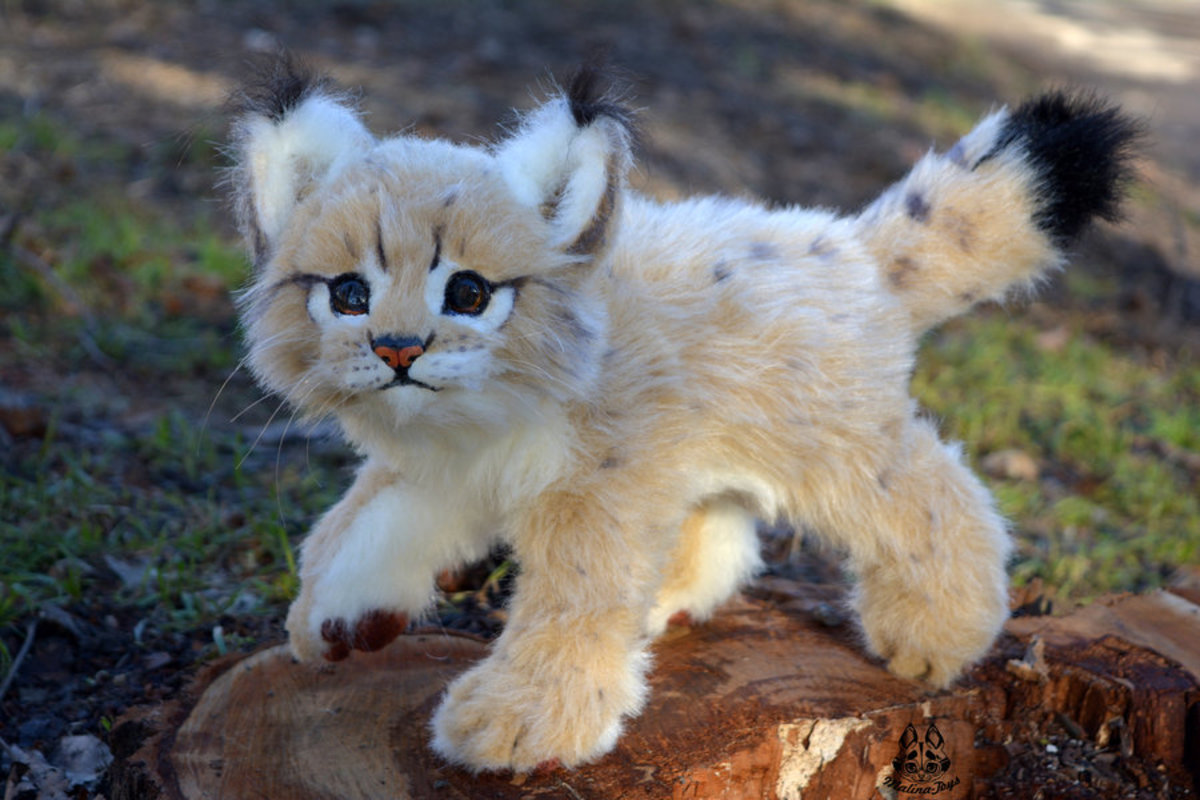 Bobcat or Toy