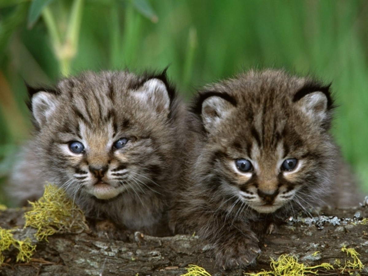 How to take care of your Bobcat - a complete guide