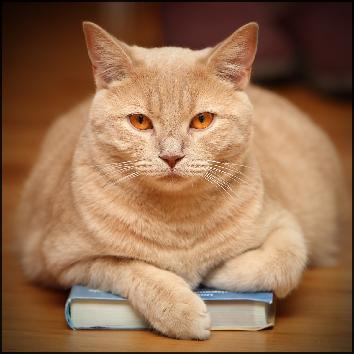 Cats make perfect book buddies.