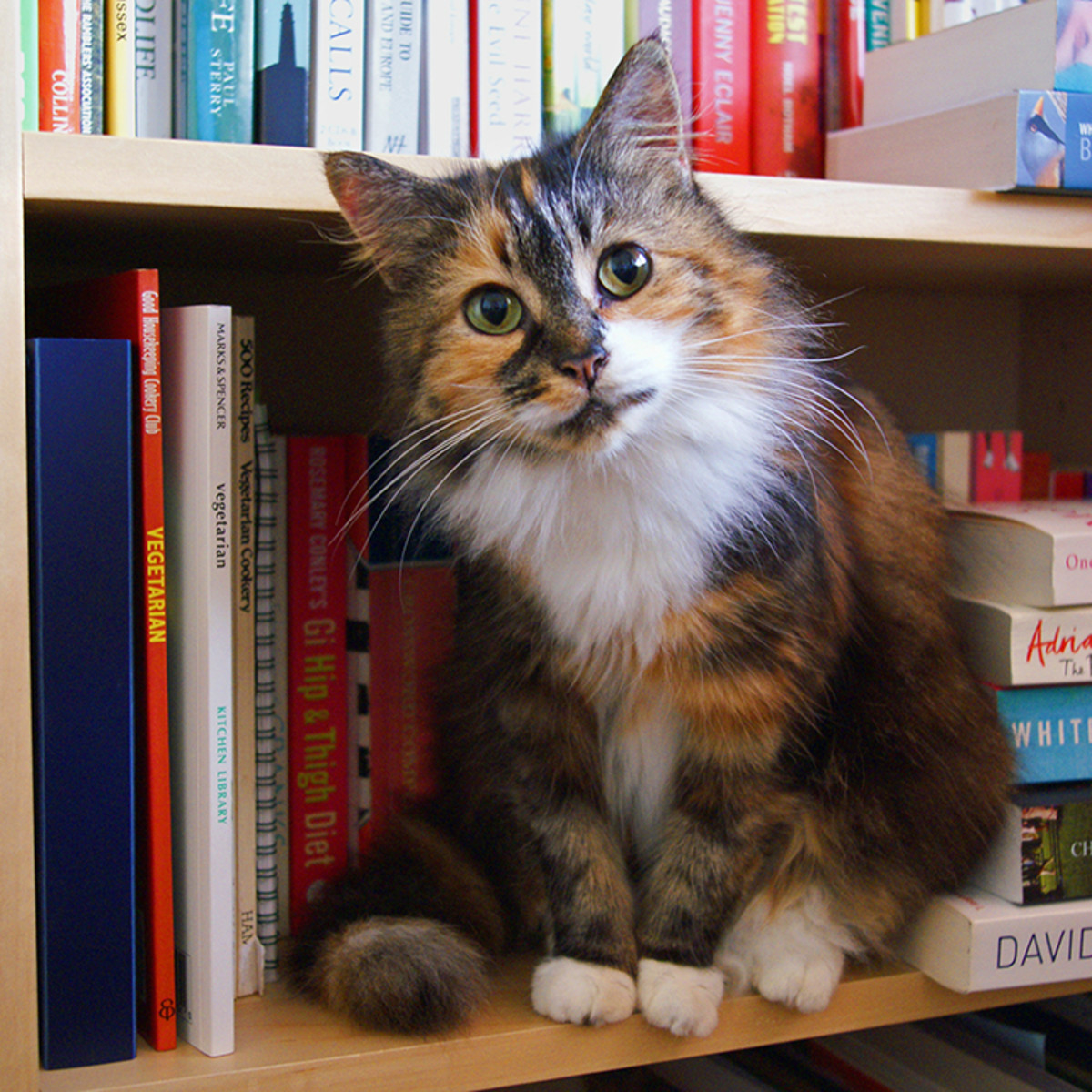 "This curious cat asks, ""What will you do with books you cannot sell?"""