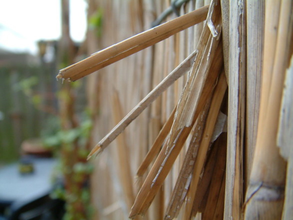 Landlords are responsible for repairing fences.