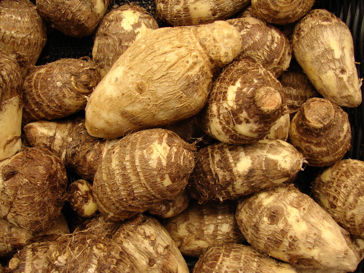 Taro Root - Colocasia or Arbi and Poi - Nutrition and Health Benefits