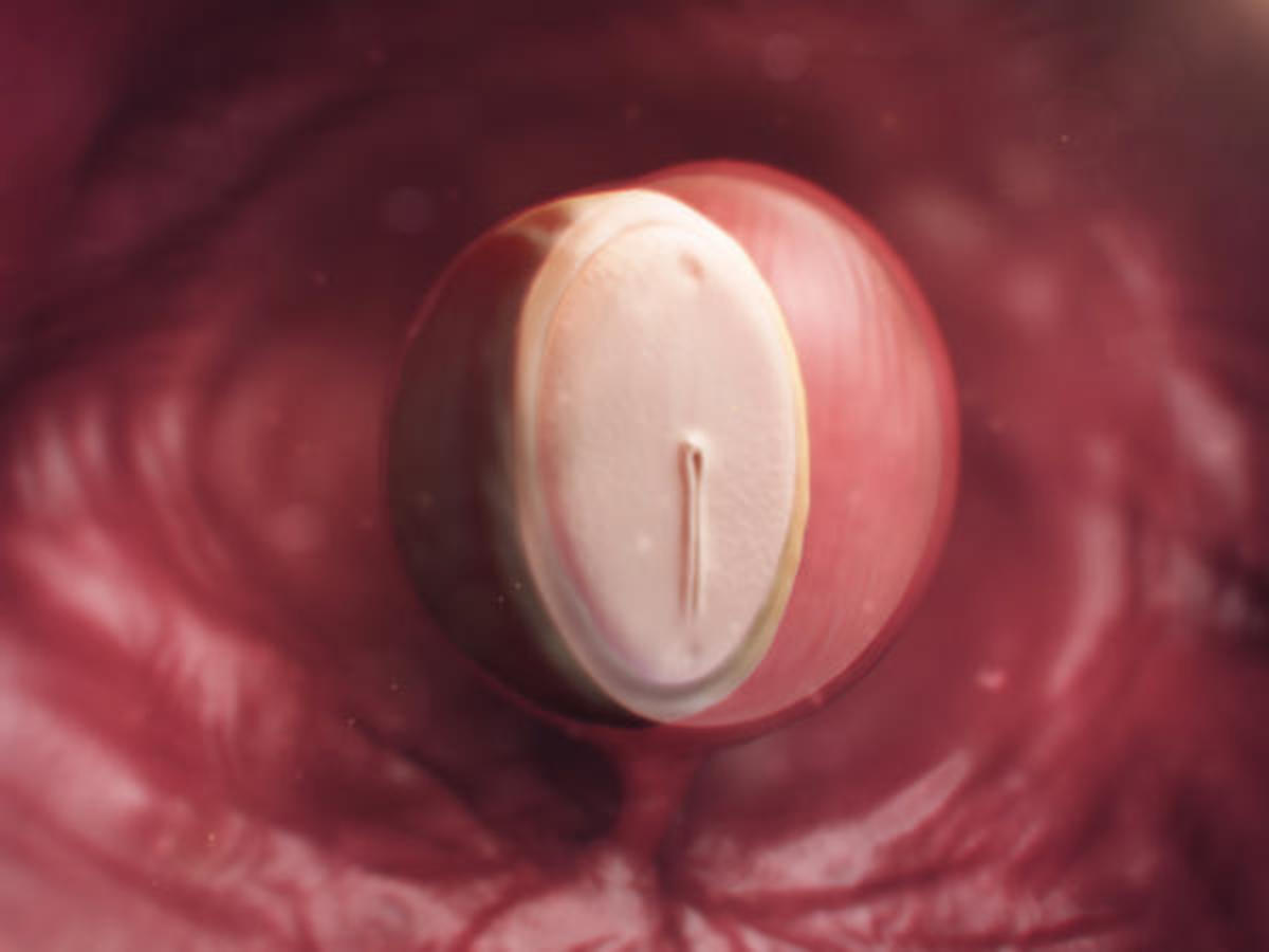 The Embryo at Week 4 is the Size of a Poppy Seed