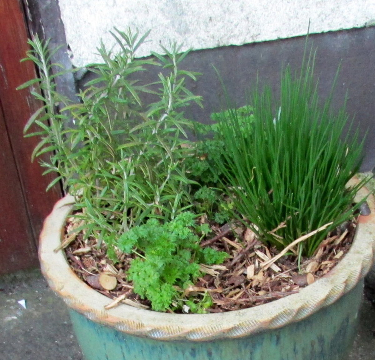 Thyme, Parsley and Chives in a pot