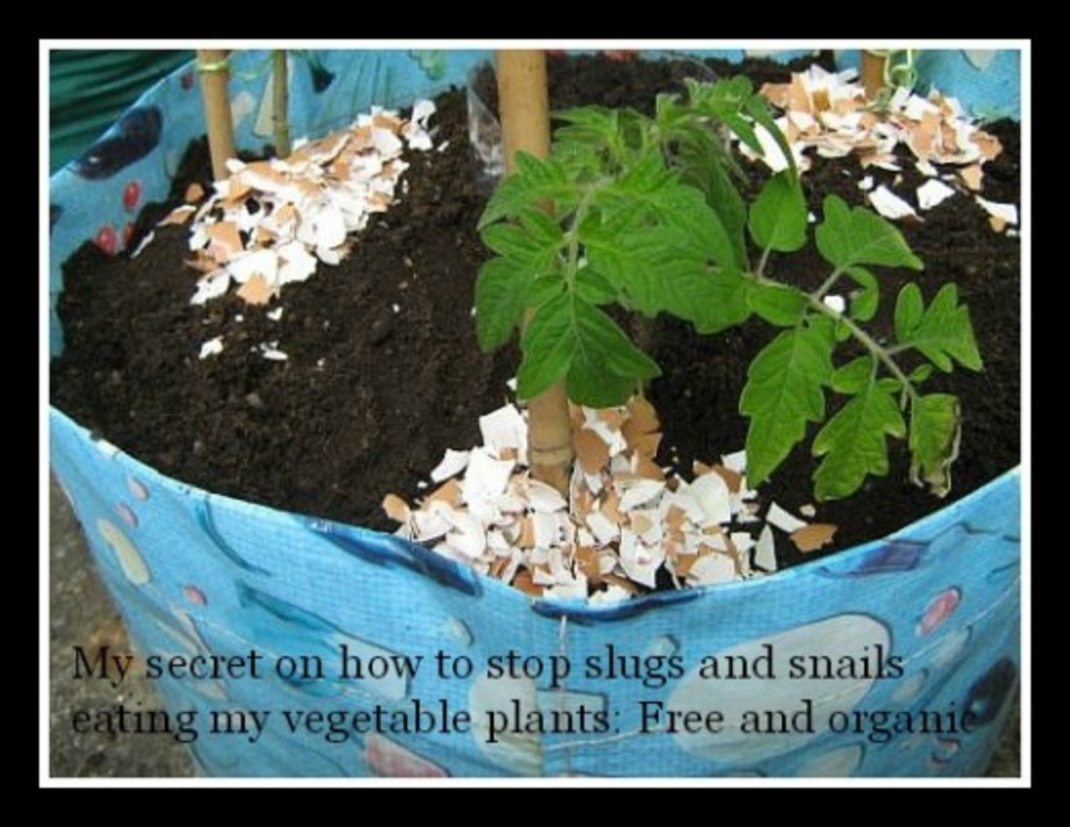 How to protect plants from slugs without harming animals