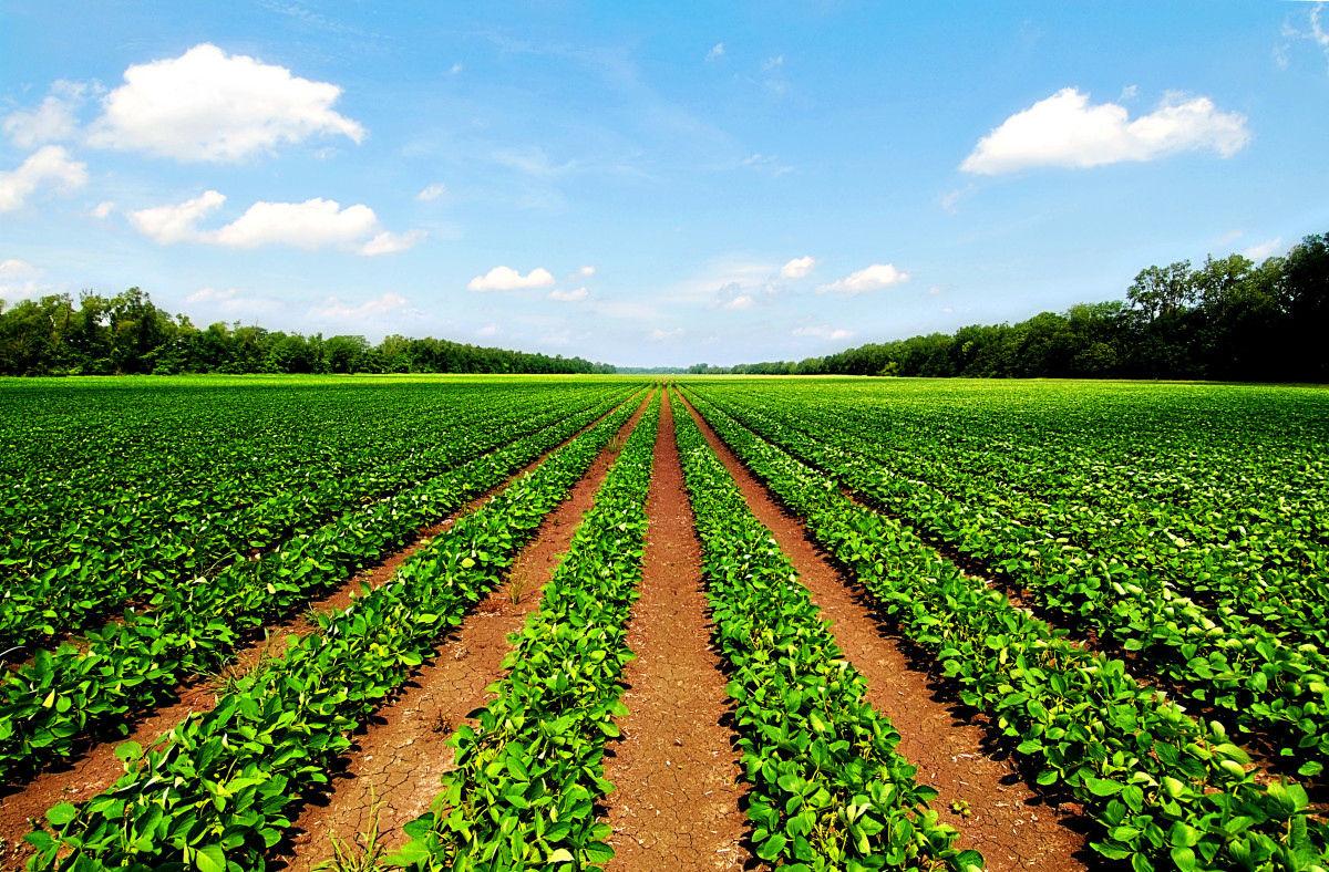 Field of Study | Agricultural & Resource Economics