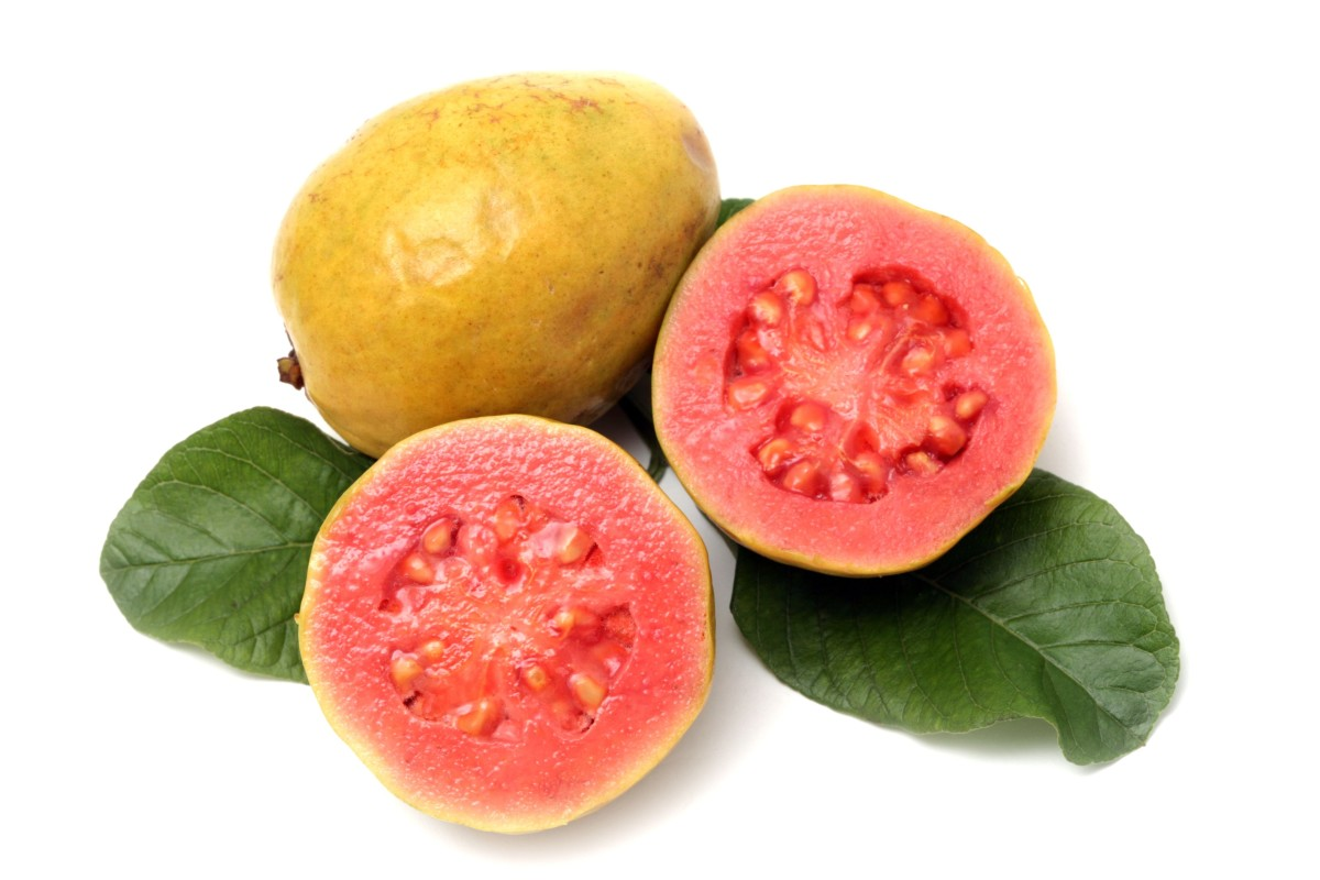 Ripe Guava Fruit