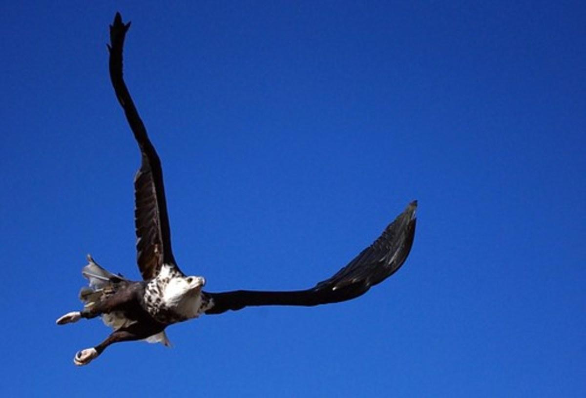Like An Eagle I Am Free To Soar