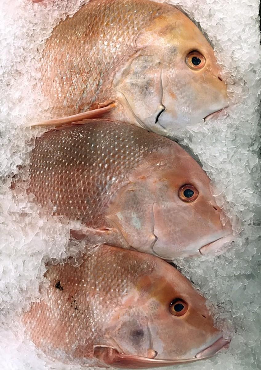 Emperor Fish - Lethrinus olivaceus