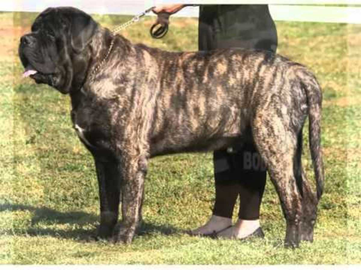 extinct-dog-breeds