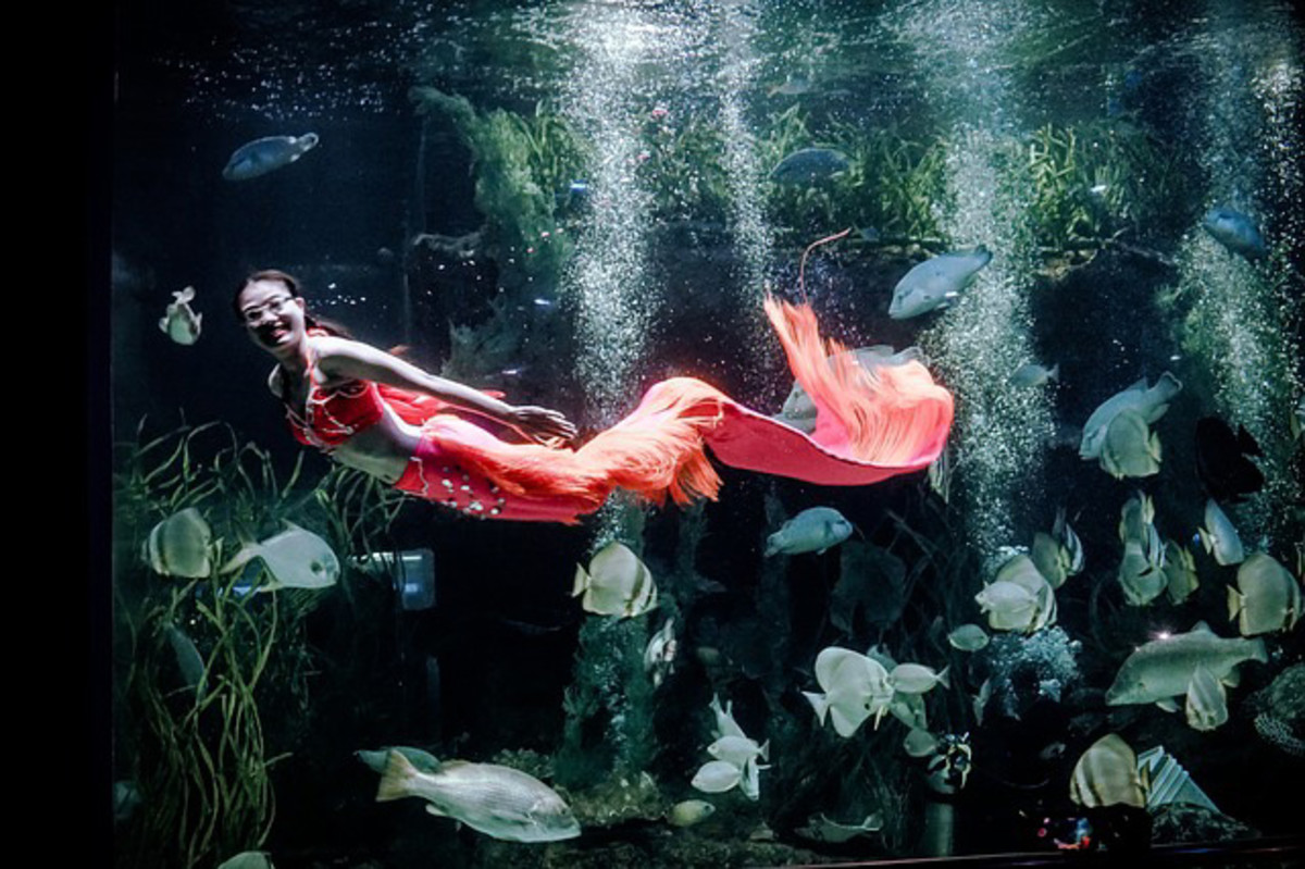 A human mermaid enjoying her swim among the fishes.