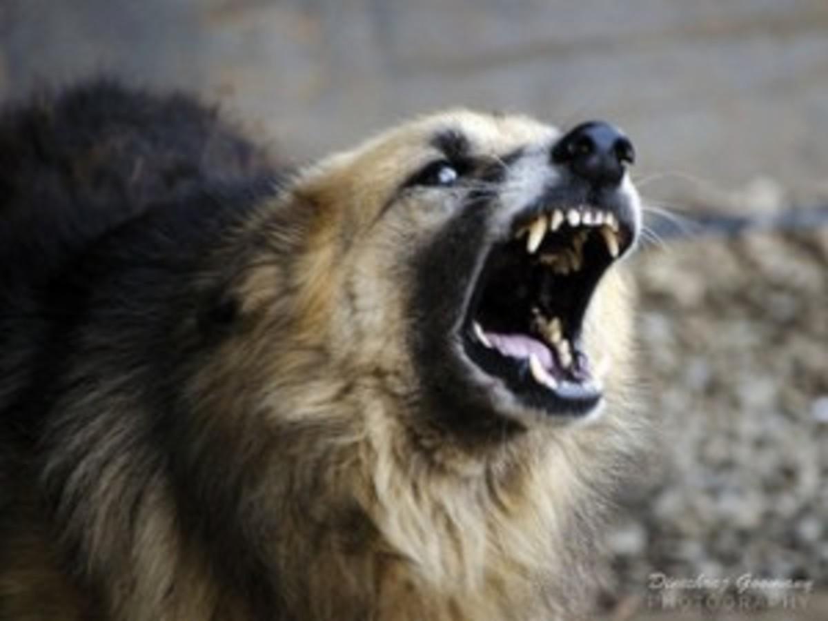 Dog's aggressive behavior at Night