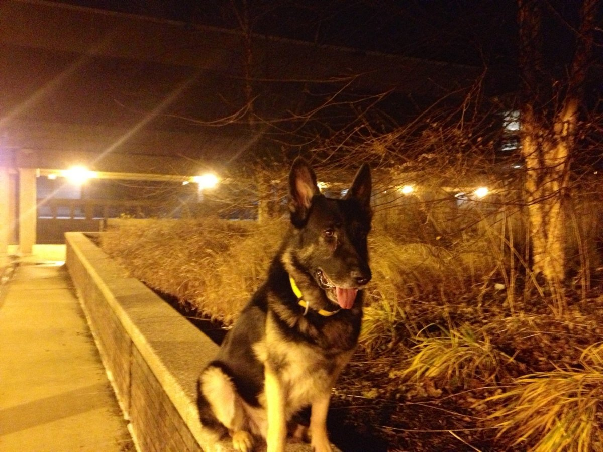 Why dogs became aggressive at night?