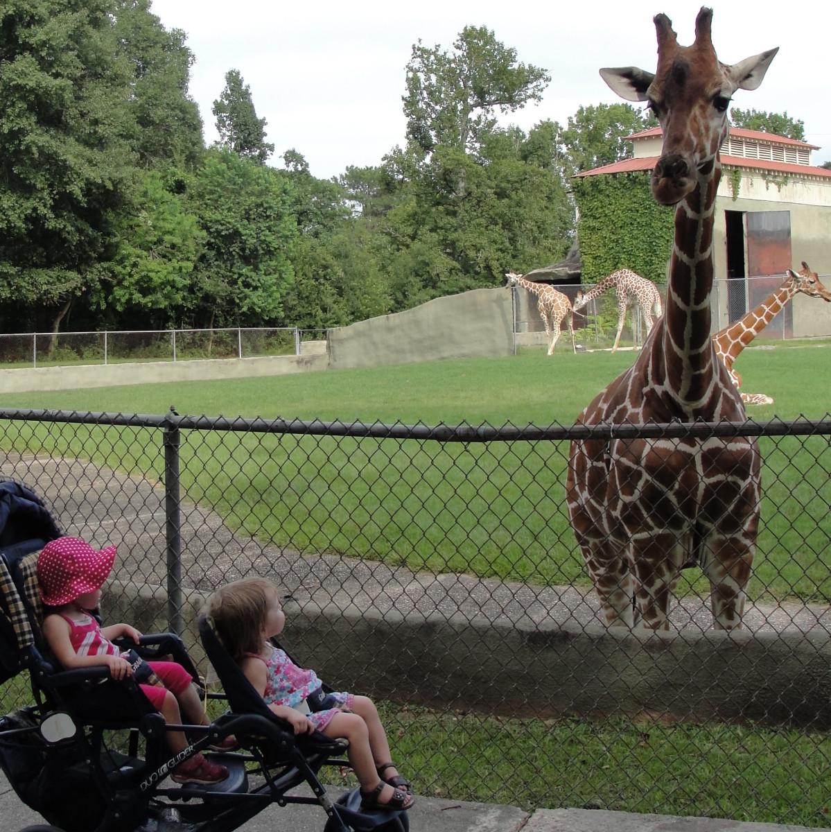 Free Museum, Zoo, Garden, & Park Tickets