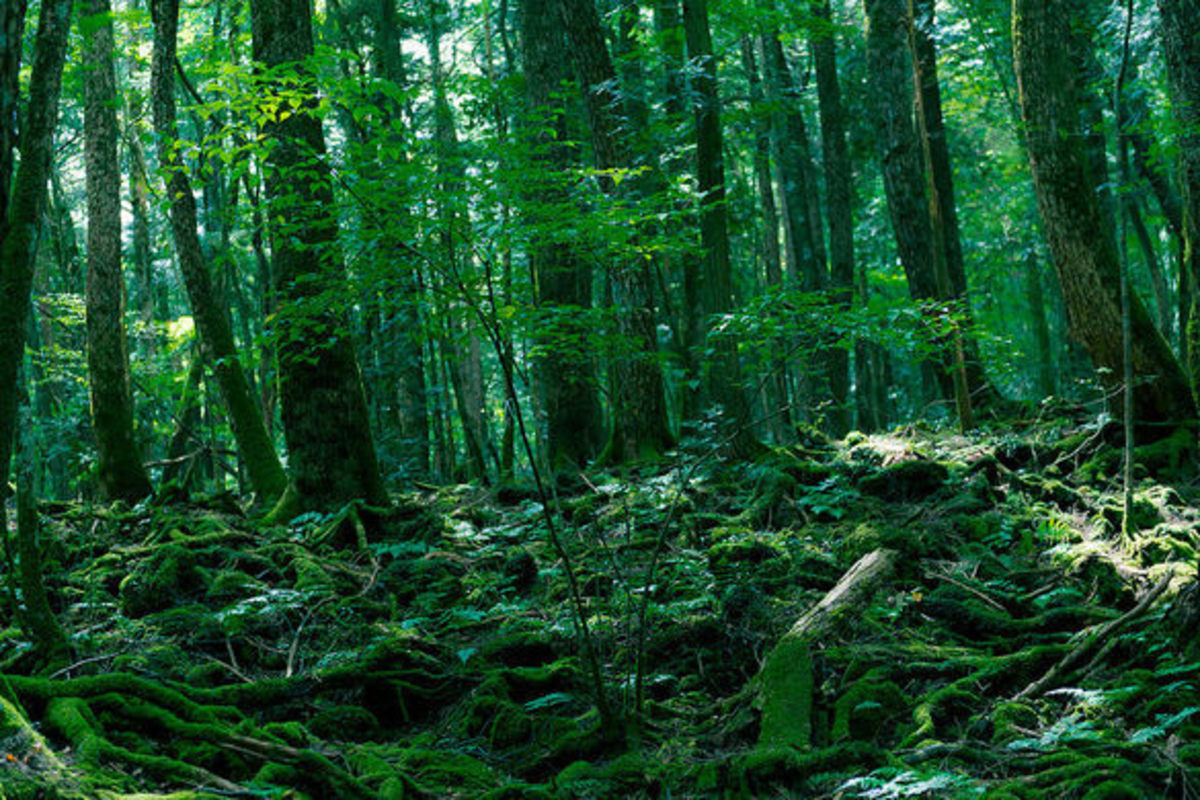 Aokigahara  and How Two Cultures Approach Suicide