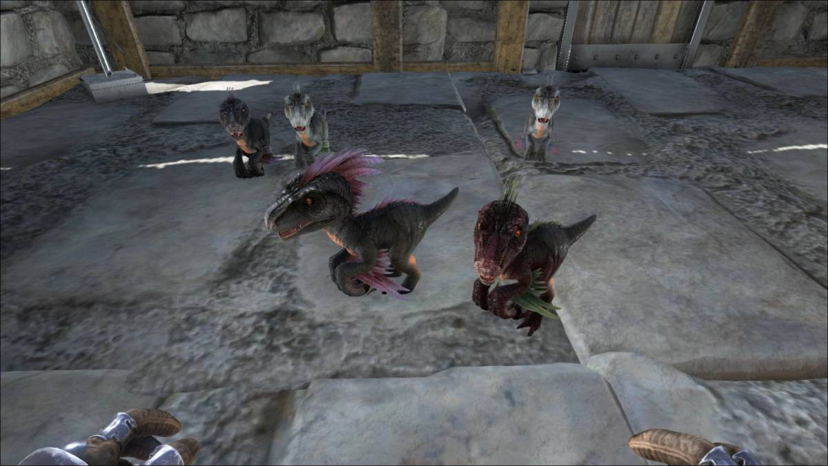 Its fairly easy to breed the dinosaurs on Ark survival evolved, however, it can be time consuming to hatch the egg and raise them to where they can defend them self.