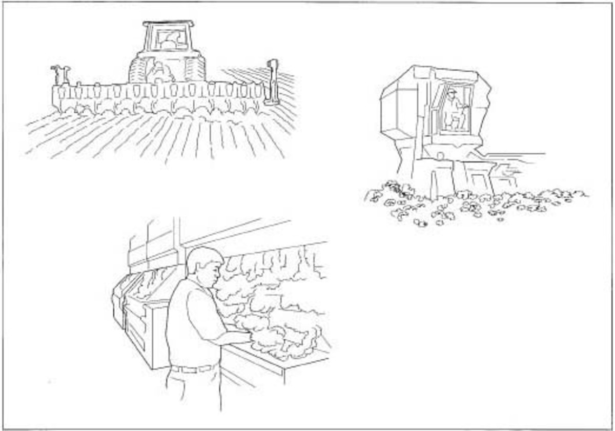 The stages of cotton production including seeding, picking, and ginning.