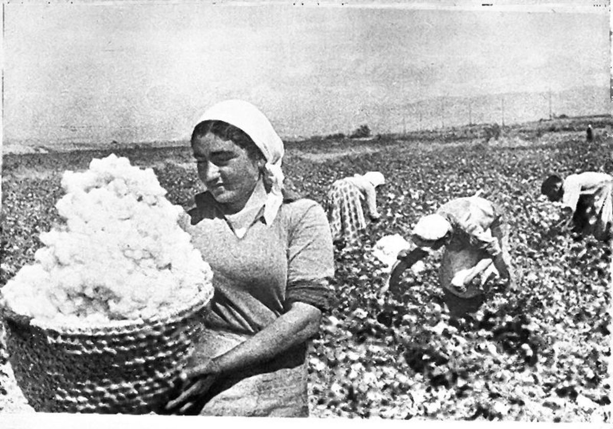Picking cotton in Armenia in the 1930s