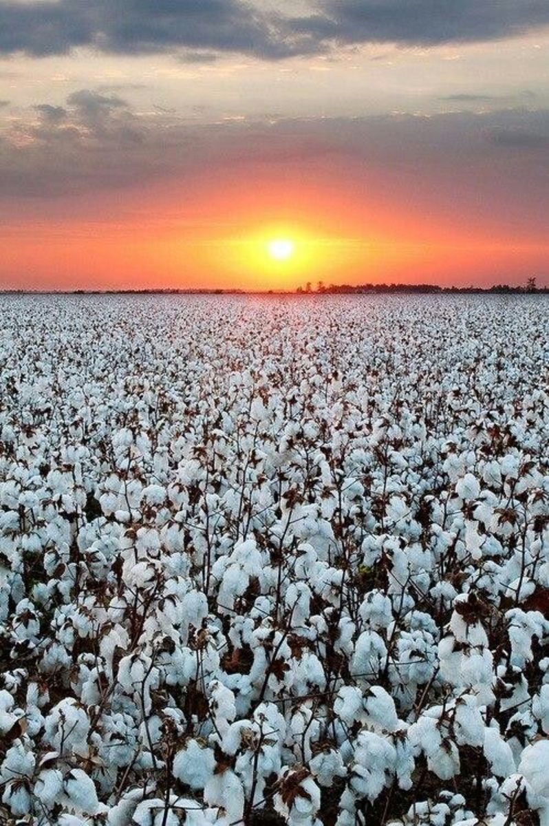 Cotton: Manufacturing Process, and How to Maintain Cotton Textiles During Washing and Storage