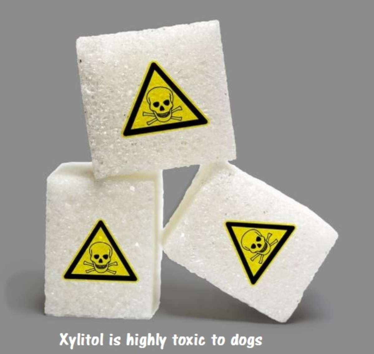 a-list-of-artificial-sweeteners-that-are-bad-for-dogs