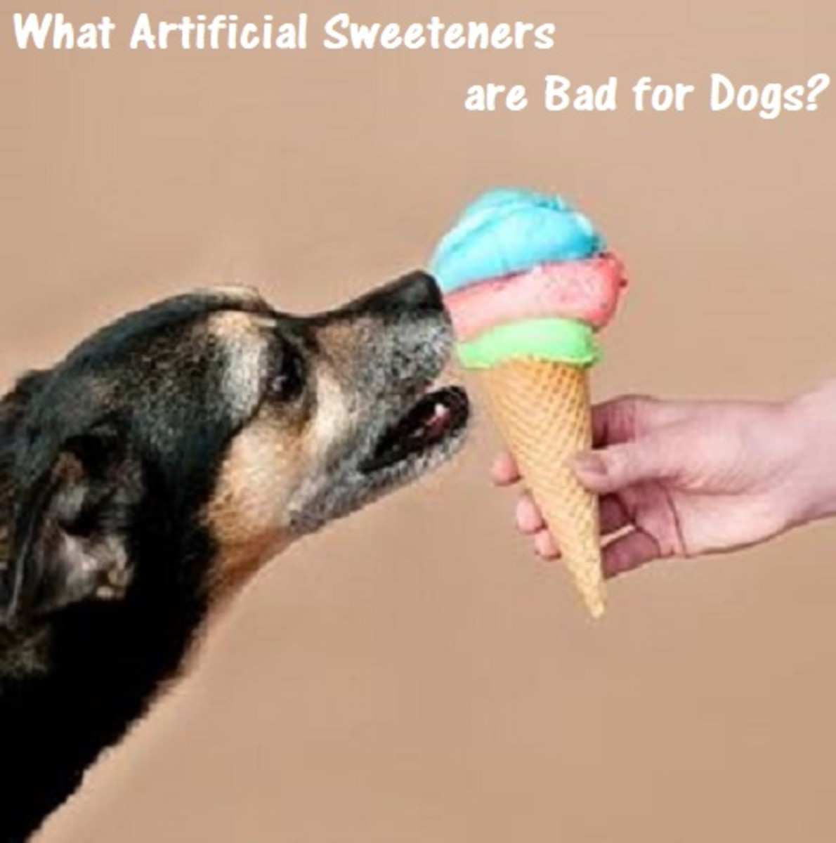 Are Artificial Sweeteners Bad For Dogs?