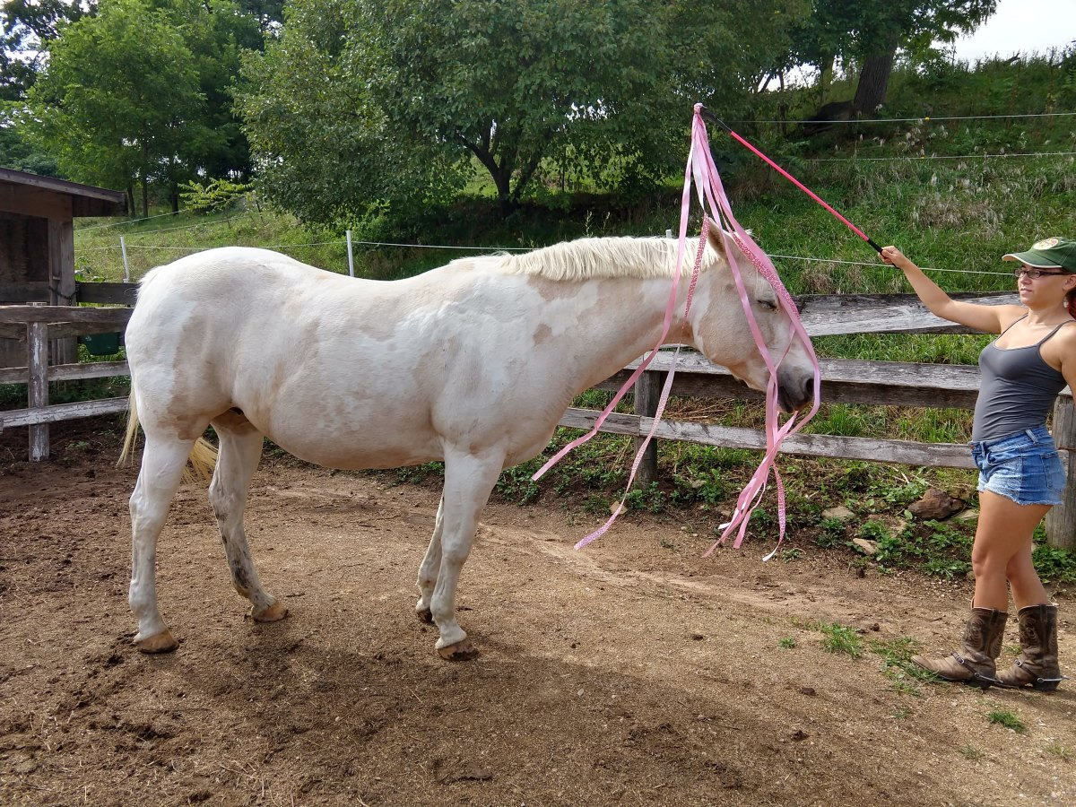 A Safe New Tool to Desensitize Your Horse