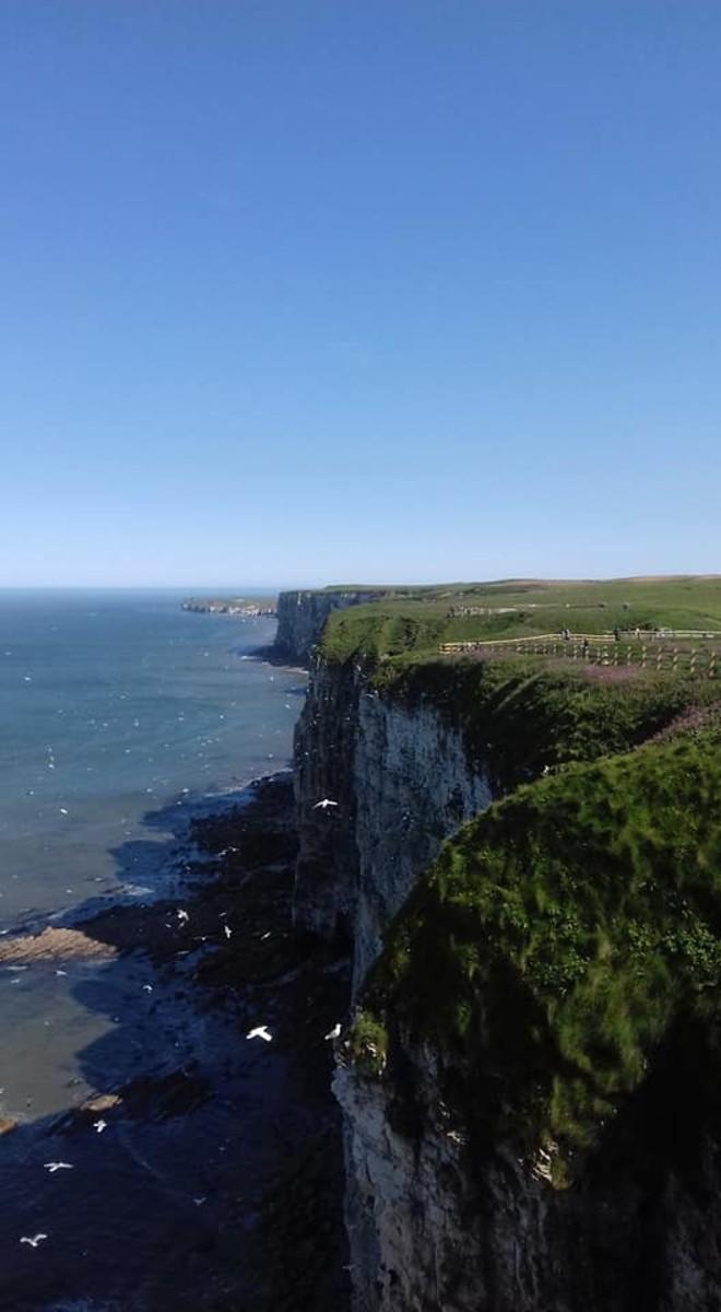 Bempton Cliffs Nature Reserve: A Visitors Guide