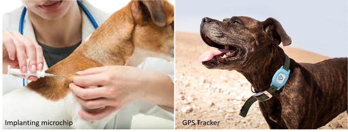 10-benefits-of-gps-dog-collars-for-pet-owners