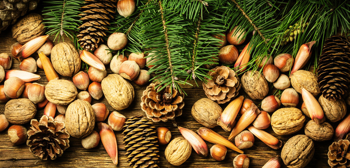 Popular Christmas Nuts