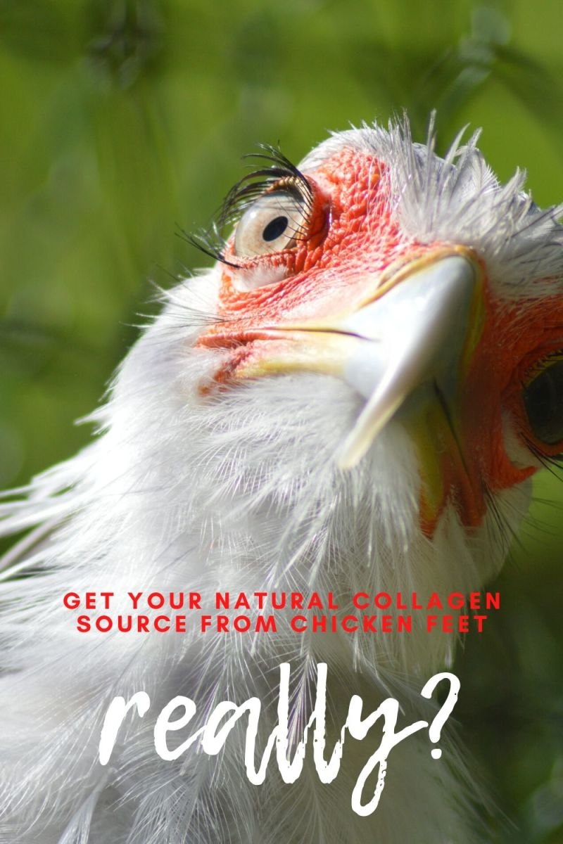 Natural Collagen Source From Chicken Feet, Really?